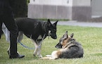 Biden dogs Major and Champ on the South Lawn of the White House in Washington, Wednesday, March 31, 2021.