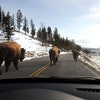 Dashboard views inside Yellowstone National Park may cost more this year. Rental car prices are on the rise due to low supply and high demand.