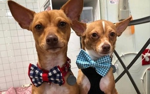 This teen makes tiny bow ties for shelter dogs to help them look spiffy and get adopted