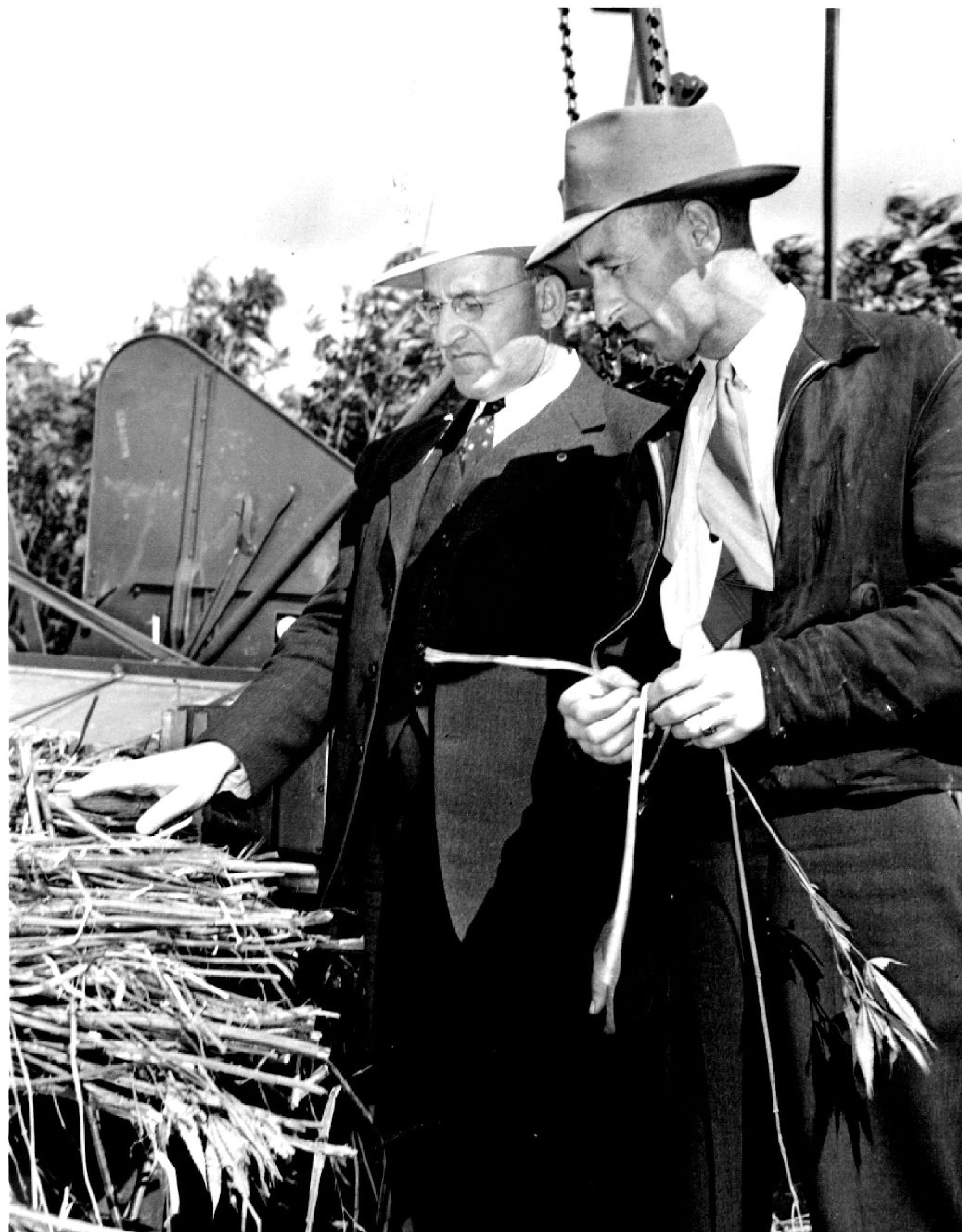 A state agriculture official, left, inspects the first hemp harvest in Mapleton, Minn in 1943 along with the manager of the Mapleton processing plant.