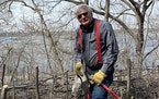"Jim Nicholas of Minneapolis is a familiar presence around Lake Harriet as he battles buckthorn, ""the poster child for invasive species."""