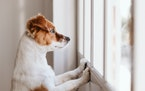 Prepare your pet for your absence to help alleviate separation anxiety.iStock