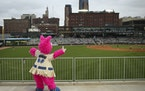 Longtime mascot Mudonna remains a part of Saints games at CHS Field, but now the players for the home team will be one step away from a promotion to t