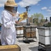 Susan Brown keeps hives on the roof of her St. Paul chocolate shop, Mademoiselle Miel, and uses the honey in many of her confections.   RENÉE JONES S