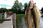 Anderson: Opener wisdom. Walleyes can be finicky, but they're not smart