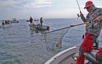 Steve Vilks of Naples, Fla., landed a walleye on Lake Winnibigoshish on Saturday, the opening day of the 2021 Minnesota inland fishing season.
