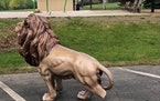 The 4-foot golden lion was moved from its spot at the Lions Park splash pad and vandalized last weekend.