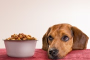 The smell test for dog food is a different standard.