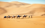 Camel herders in Morocco cross the Erg Chebbi dunes, a sweeping sea of sand reaching skyscraper heights in some places. (Norma Meyer/Los Angeles Times