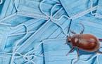 Lileks: Do masks protect against June bugs?