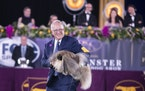 Wasabi, a Pekingese, wins the toy group at the Westminster Kennel Club Dog Show, held at the Lyndhurst Mansion in Tarrytown, N.Y., on Saturday, June 1