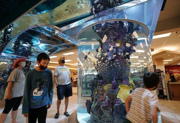 At Scheels in Eden Prairie Center, customers can walk under a 16,000-gallon saltwater aquarium or take a ride on the 65-foot indoor Ferris wheel.