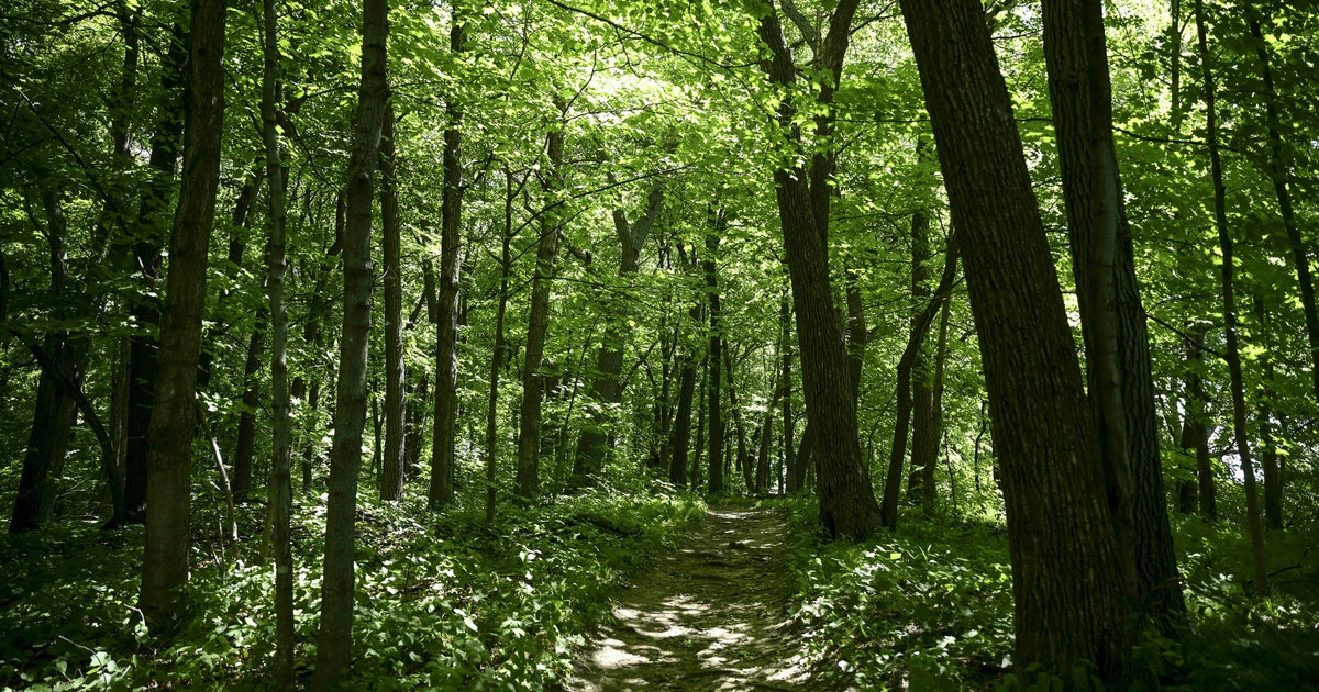 Natural area in Orono gets final pieces of land donated by Dayton family
