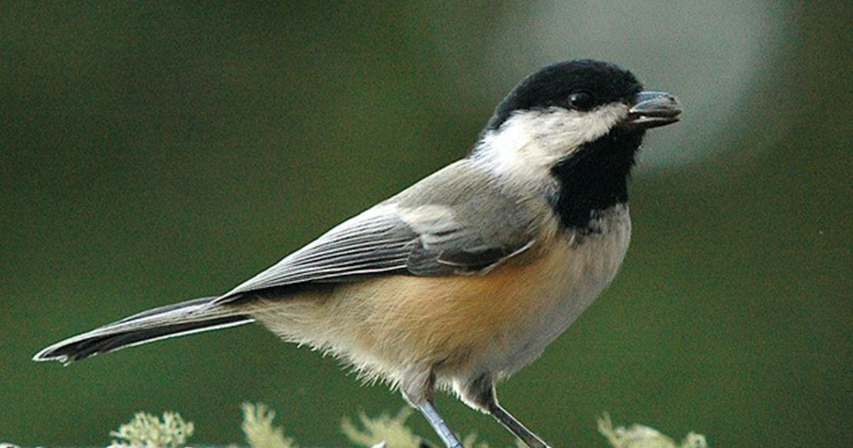 Where to place your feeders to please the birds
