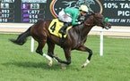 Bodenheimer, a Breeders' Cup participant last year, will run in Wednesday's Mystic Lake Derby at Canterbury Park.