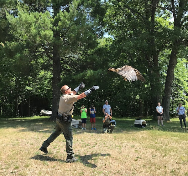 Conservation Officer Robert Gorecki released one of three bald eagles as members of the Donahue family watched.