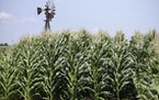 The expectation of rainfall in the Midwest this week sent corn prices down to a trading-level limit on Tuesday.