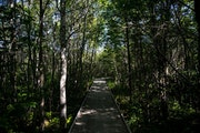 At Big Bog State Recreation Area, a one-mile boardwalk was recently built to allow visitors an immersive experience.