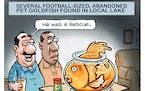 Sack cartoon: The goldfish problem