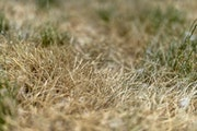 Minneapolis officials said Friday they were not yet putting sprinkling restrictions in place but will if drought conditions worsen.