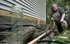 Dawn Gaetke grows mushrooms on prepared oak logs in a shady spot outside her house in Inver Grove Heights.