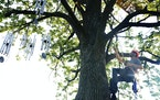 """A Walker Art Center crew worked to install """"Wind Chime"""" in the Minneapolis Sculpture Garden."""