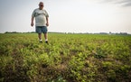 Steve Anderson, a farmer near Foley, on Friday looked over his alfalfa crop, which he said should be up to his knees at this point in the season. It b