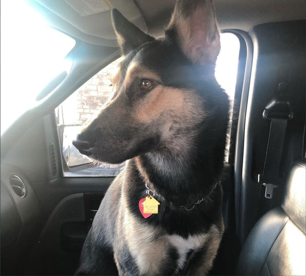 GoGo, a dog who was inside an SUV when it was stolen in St. Paul Saturday night, was found dead inside the abandoned car, police said.