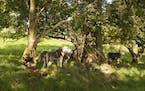 James Rebanks on his farm. Photo by Stuart Simpson