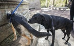 """A walk in the park gives dogs plenty to sniff. Dogs and cats process pheromones through a sort of second """"nose"""" located on the roof of their mouth"""