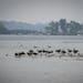 Visitors swim in White Bear Lake, where the lake has receded from the shore at White Bear Lake County Park. ] LEILA NAVIDI • leila.navidi@startribun