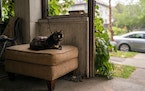 Fish, a 13 year-old cat belonging to Zach Randolph, sits on the porch of Zach's home in the Wedge neighborhood.