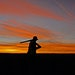 South Dakota pheasant hunters have long enjoyed plentiful ringneck and spectacular sunsets. The sunsets are still there.