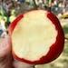 Minnesota-grown First Kiss apple.
