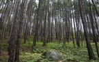 Climatologists foresee the northeastern boreal forest receding or going away, possibly as early as 2070.