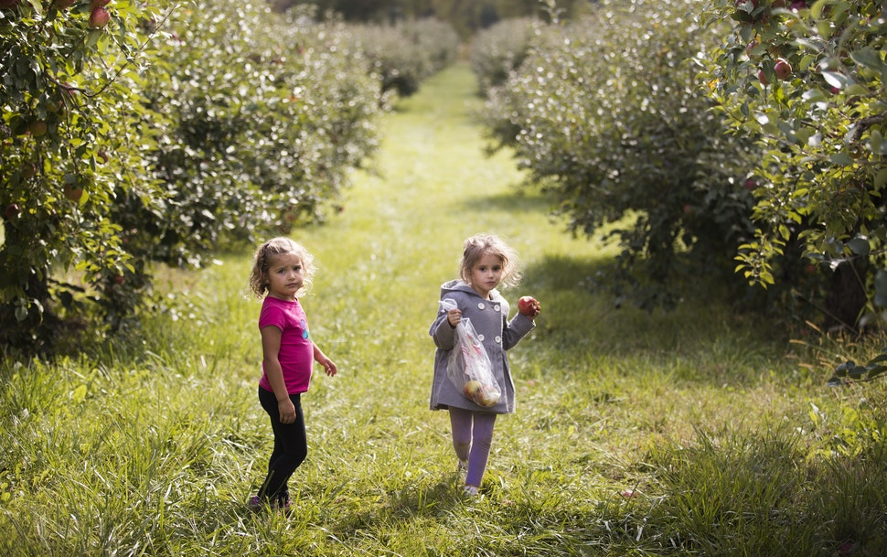 Four-year-olds Lexi Wallace, left, and Ella Janisch, both of Hudson, Wis. wait for their mothers while picking Haralson apples Afton Apple Orchard in