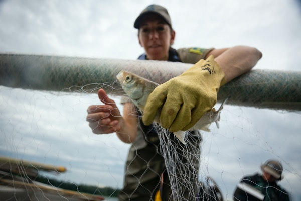 Environments that Minnesota's fish depend on face their own challenges