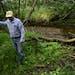 Ken Nodo walked along the muddy banks of Little Rock Creek Friday morning.  ] AARON LAVINSKY • aaron.lavinsky@startribune.com  Ken Nodo has spent hi