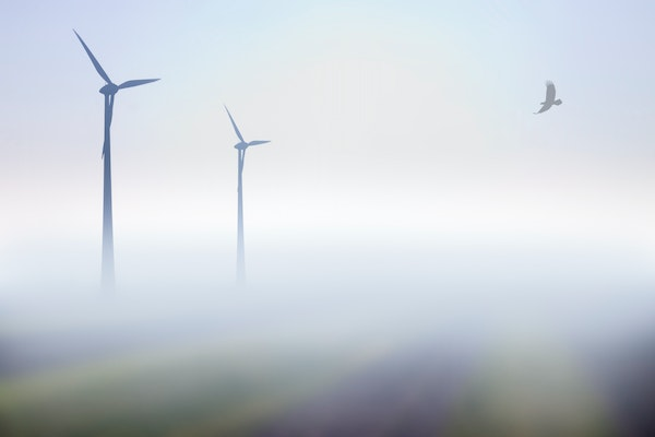 U researchers drill down on ways to protect eagles in wind farms' airspace