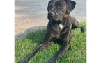 Vic weighs approximately 50 pounds and is described as very friendly.