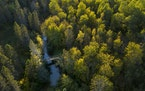 Forest Carbon Works of Minneapolis offers landowners the opportunity to earn money through forest carbon offset systems in California and Quebec.
