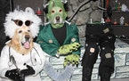 Can you craft a very scary pet costume for our Halloween contest?