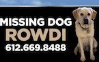 Rowdi, gone 8 months on the North Shore, is seen now only on a billboard outside Grand Marais.