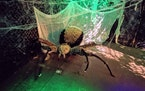 A giant spider lies in wait to scare visitors touring the haunted William A. Irvin, a Halloween feature in Duluth open once again following three miss