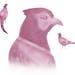 The Minnesota pheasant hunting season begins at 9 a.m. Oct. 16.