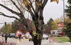 Police close off a street outside a shopping mall after a shooting in Boise, Idaho on Monday, Oct. 25, 2021. Police said there are reports of multiple